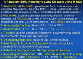 Lyme MSDIS 1
