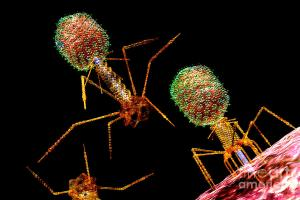 phage-group-bright-2-russell-kightley